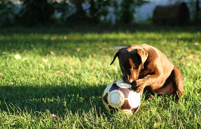 štěně s míčem