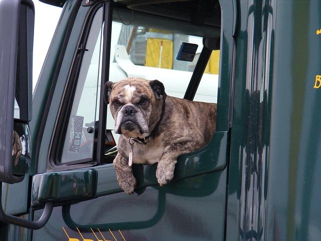 pes v nákladním autě.jpg