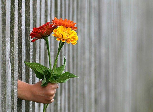 ruka s kytkou za plotem